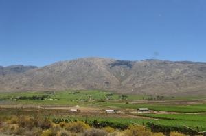 SA-premier-vineyard2